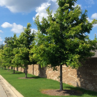 lowder_new_homes_the_oaks_sturbridge_montgomery_trees