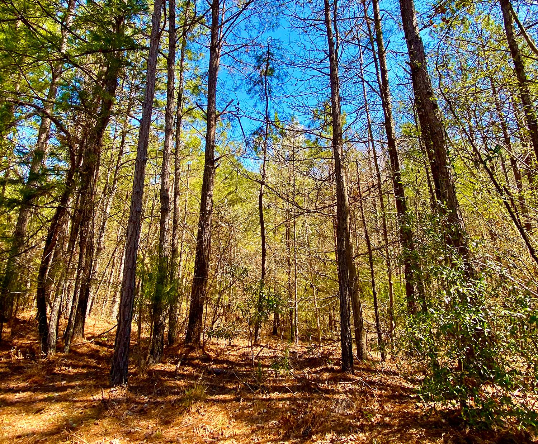 702 Emerald Drive, Lot 35 | Mountain Lakes | Prattville